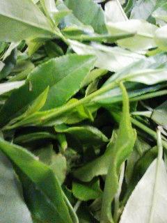 二番茶製造最終日