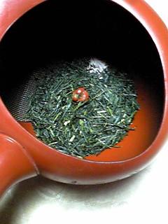 ふかみ会さんの茶